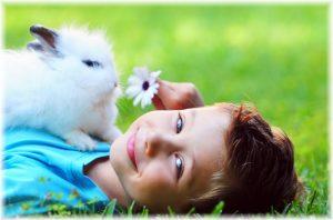 udendørs kaninbur udsalg